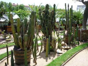 cactus parc de la tête d'or